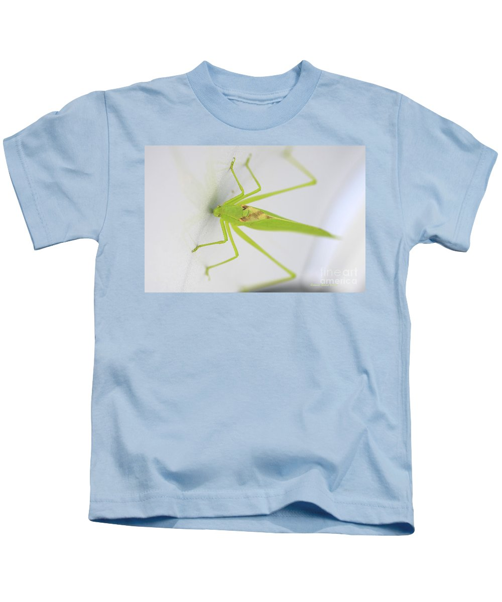 Prayingmantis Kids T-Shirt featuring the photograph Stuck On Metallic by Deborah Benoit