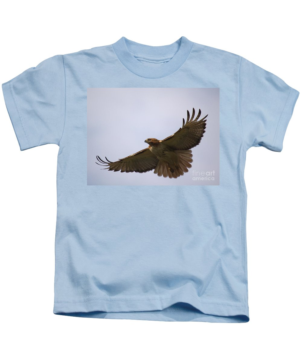 Hawk Kids T-Shirt featuring the photograph Taking Survey by Robert Pearson