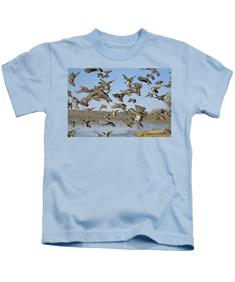 Ducks Kids T-Shirt featuring the photograph The Mad Rush by Robert Pearson