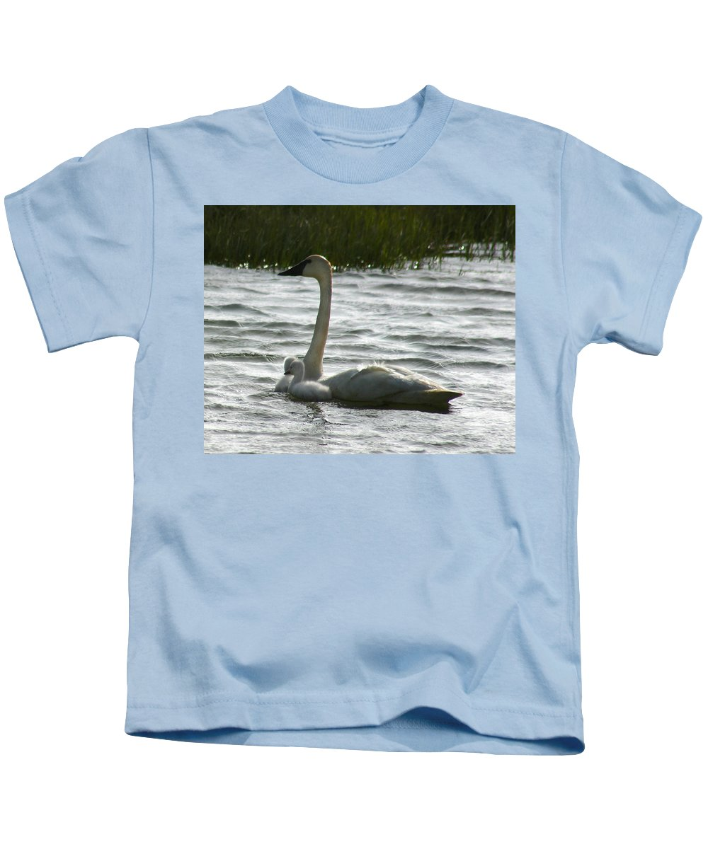 Swans Kids T-Shirt featuring the photograph Tundra Swan And Signets by Anthony Jones