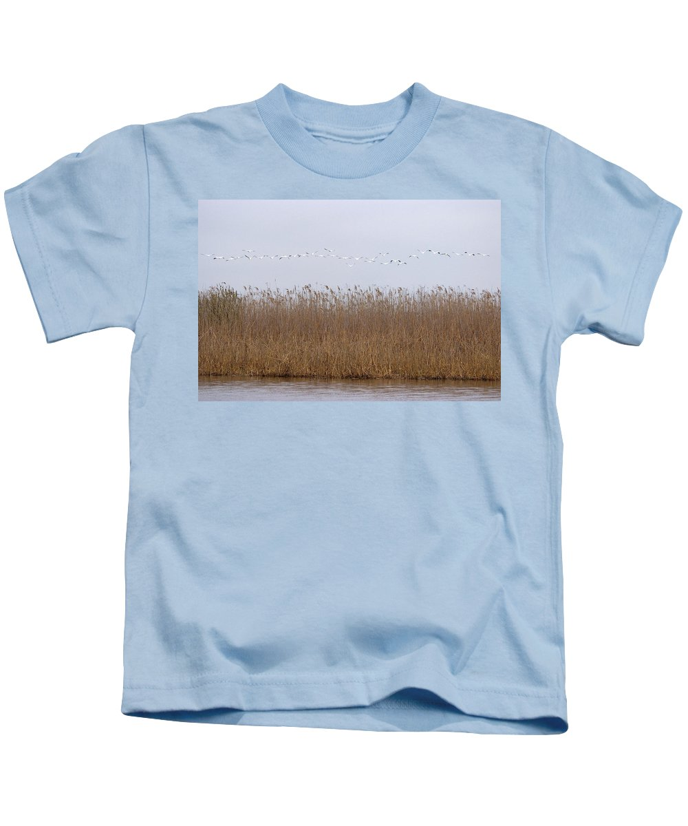 White Pelicans On Lake Kids T-Shirt featuring the photograph White Pelicans Fly Over Reed Bed On Lake by Cliff Norton