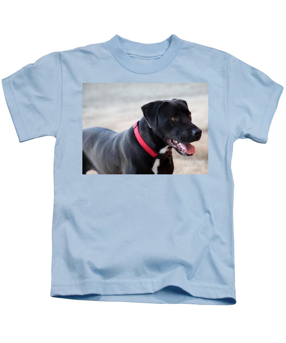 Dogs Kids T-Shirt featuring the photograph Yes I Want To Play by Amanda Barcon