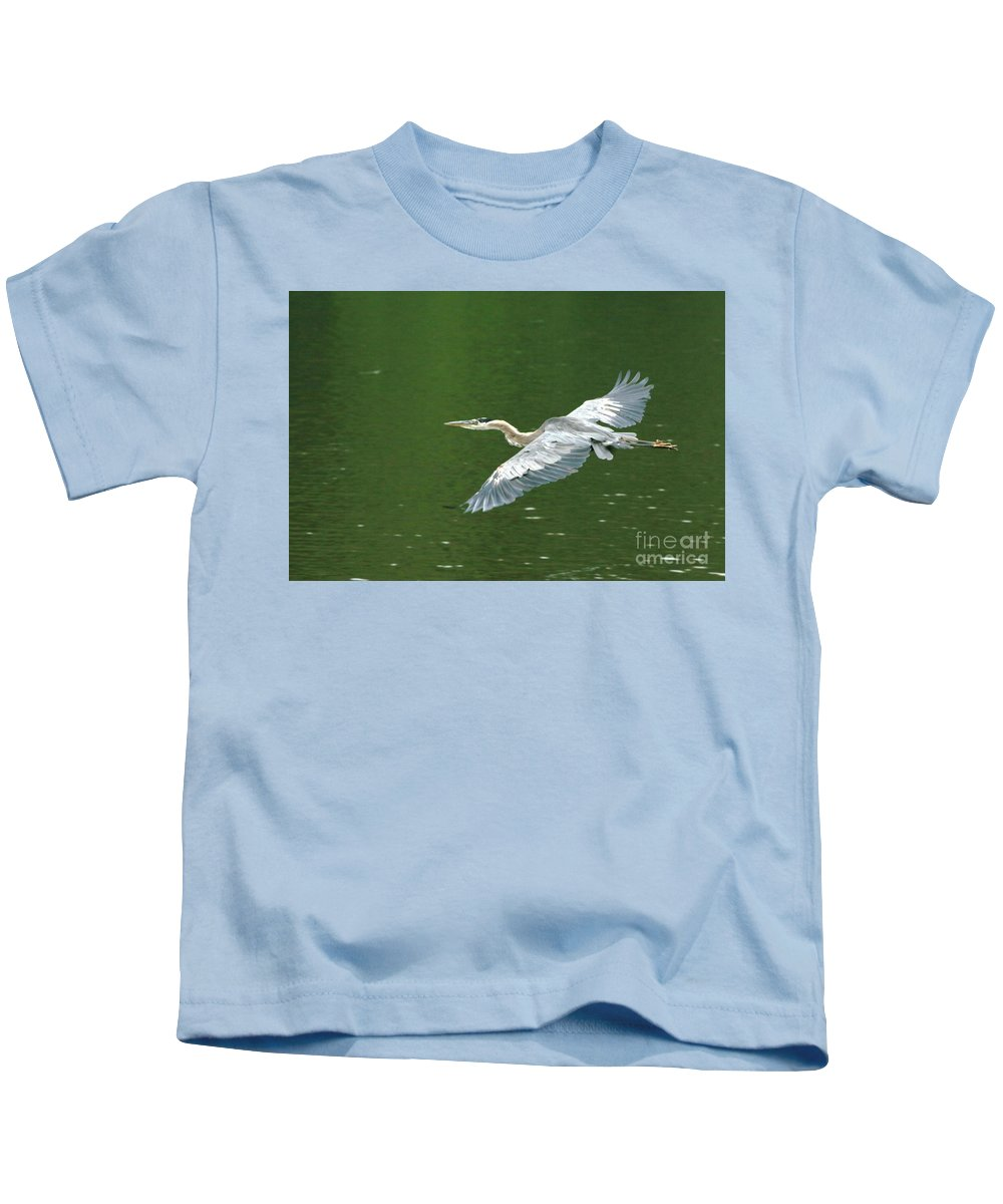 Landscape Nature Wildlife Bird Crane Heron Green Flight Ohio Water Kids T-Shirt featuring the photograph Young Great Blue Heron Taking Flight by Dawn Downour
