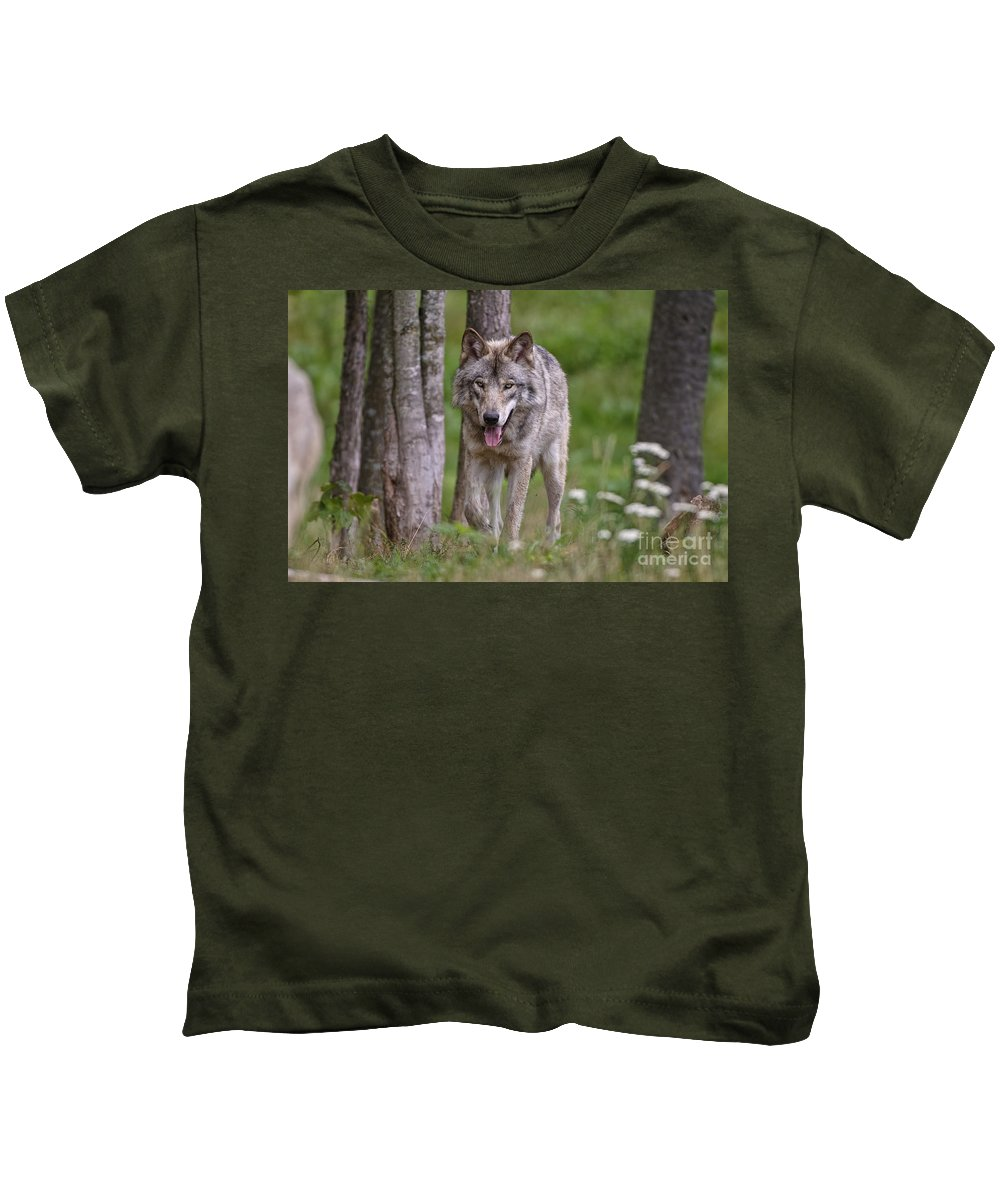 Timber Wolf Photography Kids T-Shirt featuring the photograph Timber Wolf by Wolves Only
