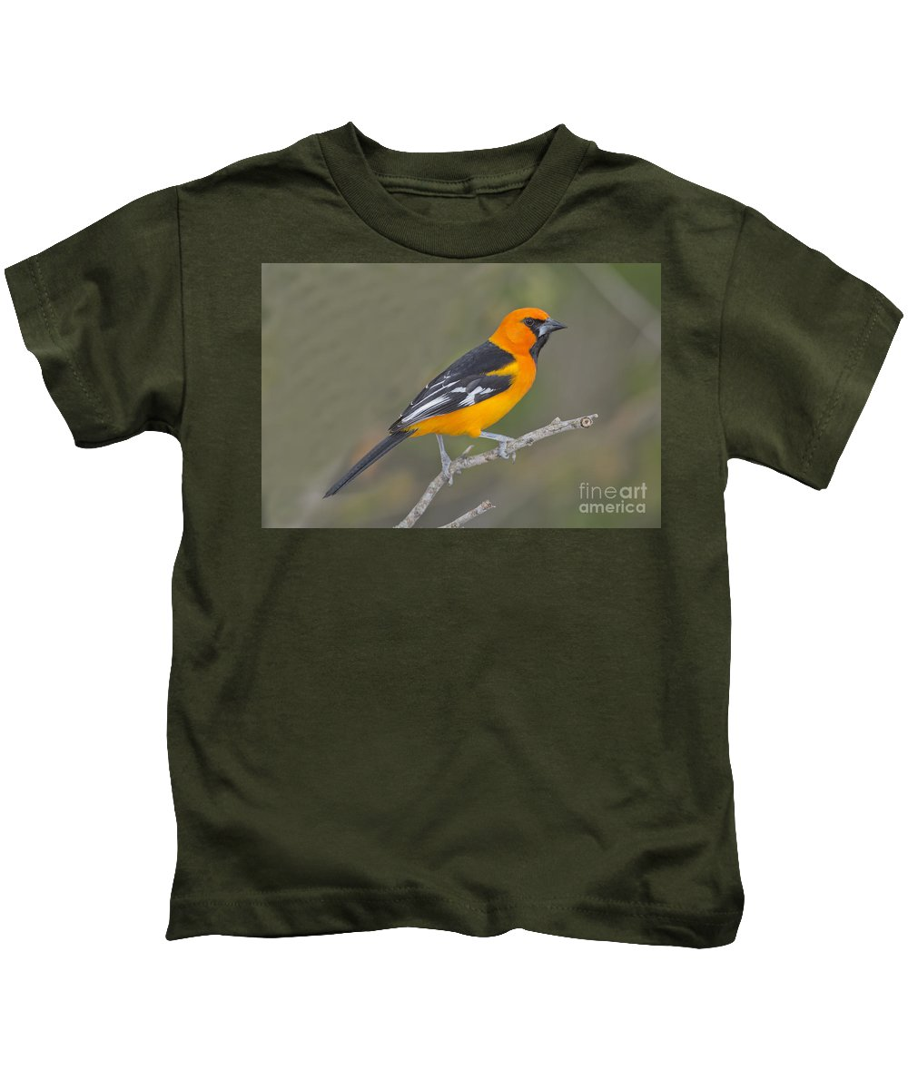 Altamira Oriole Kids T-Shirt featuring the photograph Altamira Oriole by Anthony Mercieca
