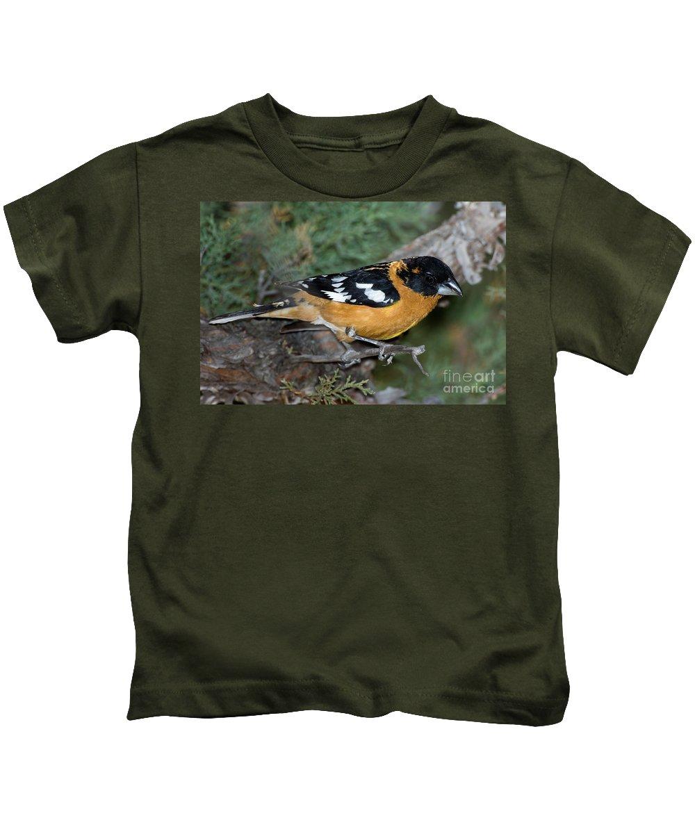 Fauna Kids T-Shirt featuring the photograph Black-headed Grosbeak Male by Anthony Mercieca