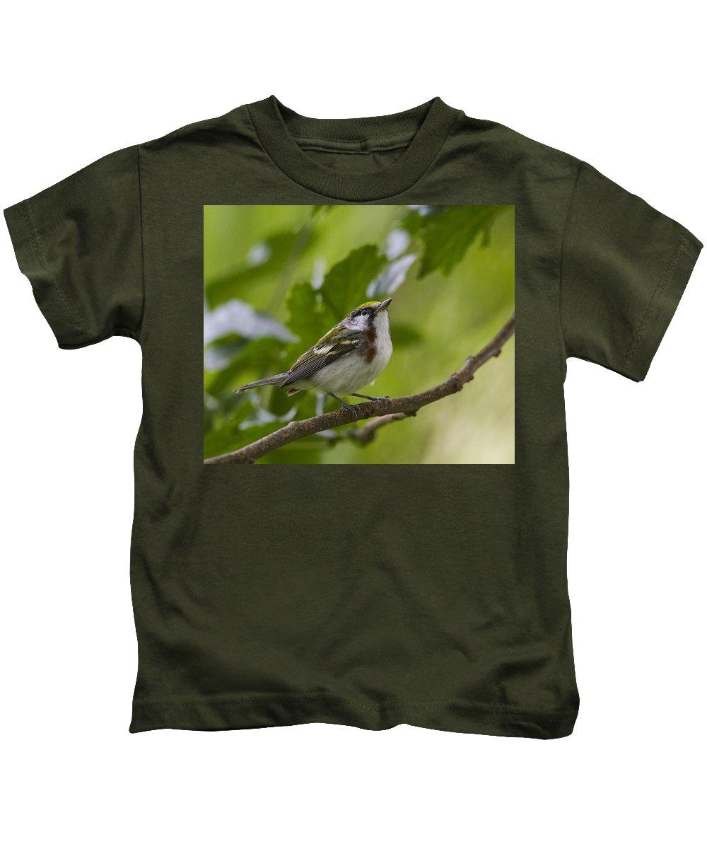 Doug Lloyd Kids T-Shirt featuring the photograph Chesnutsided Warbler by Doug Lloyd
