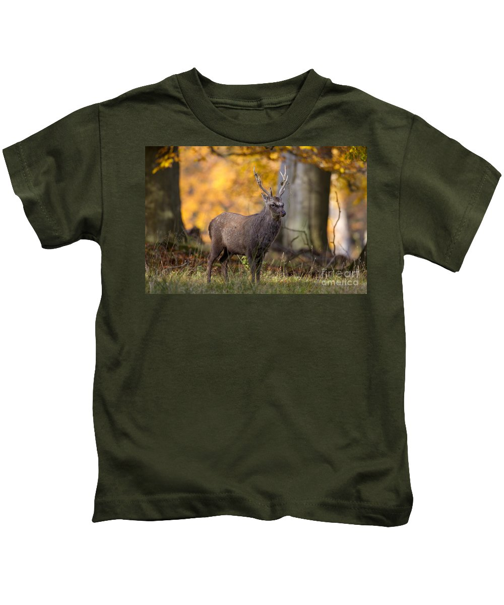 Sika Deer Kids T-Shirt featuring the photograph 110307p069 by Arterra Picture Library