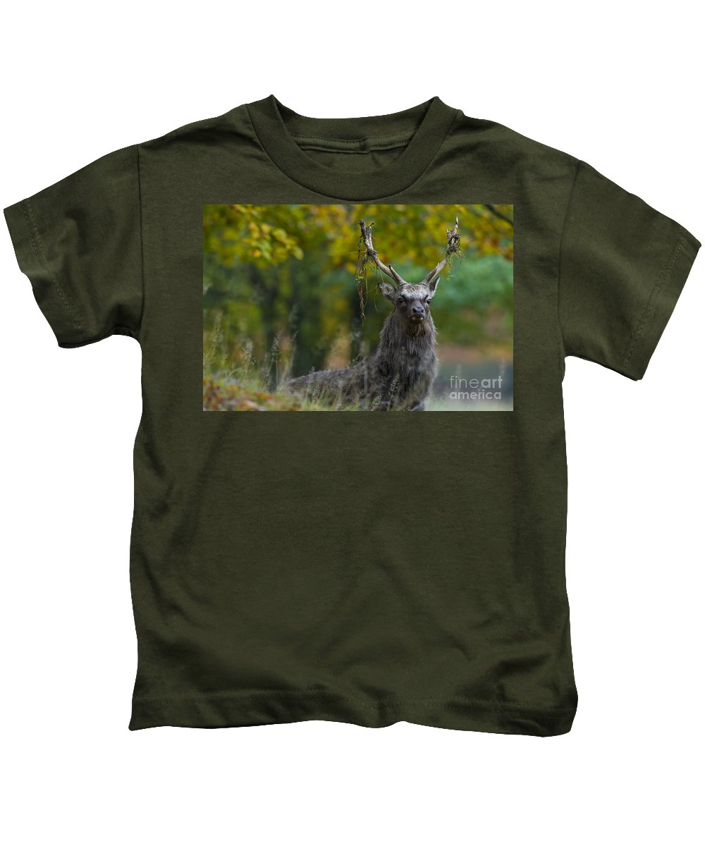 Sika Deer Kids T-Shirt featuring the photograph 110307p070 by Arterra Picture Library