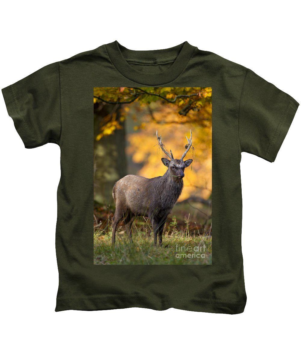 Sika Deer Kids T-Shirt featuring the photograph 110307p073 by Arterra Picture Library