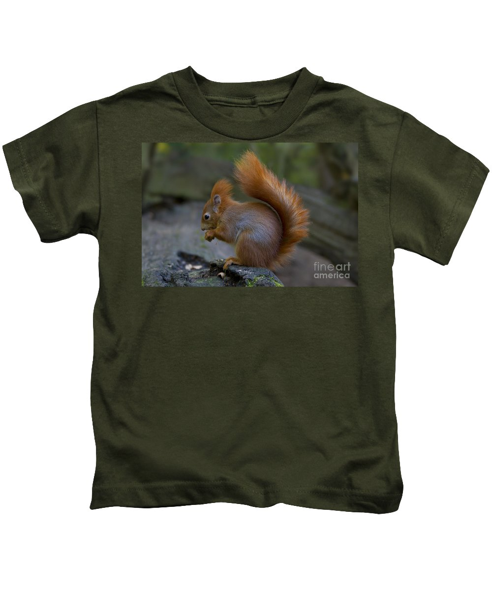 Red Squirrel Kids T-Shirt featuring the photograph 110307p078 by Arterra Picture Library