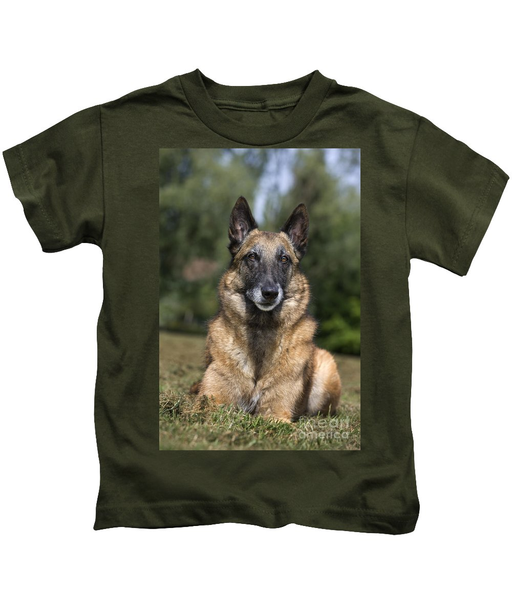 Belgian Shepherd Dog Kids T-Shirt featuring the photograph 110506p117 by Arterra Picture Library