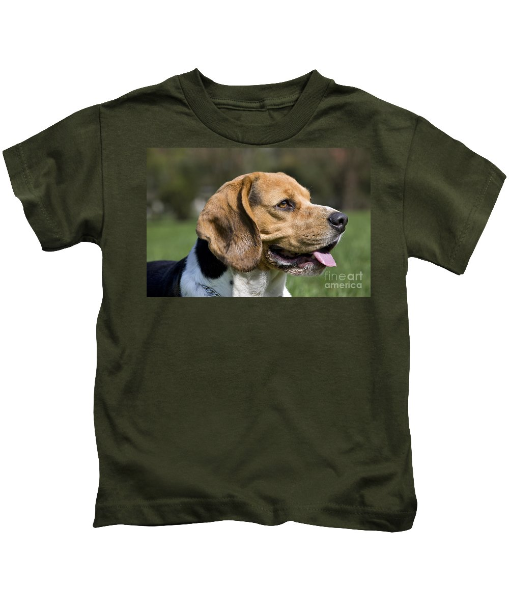 Beagle Kids T-Shirt featuring the photograph 110506p141 by Arterra Picture Library