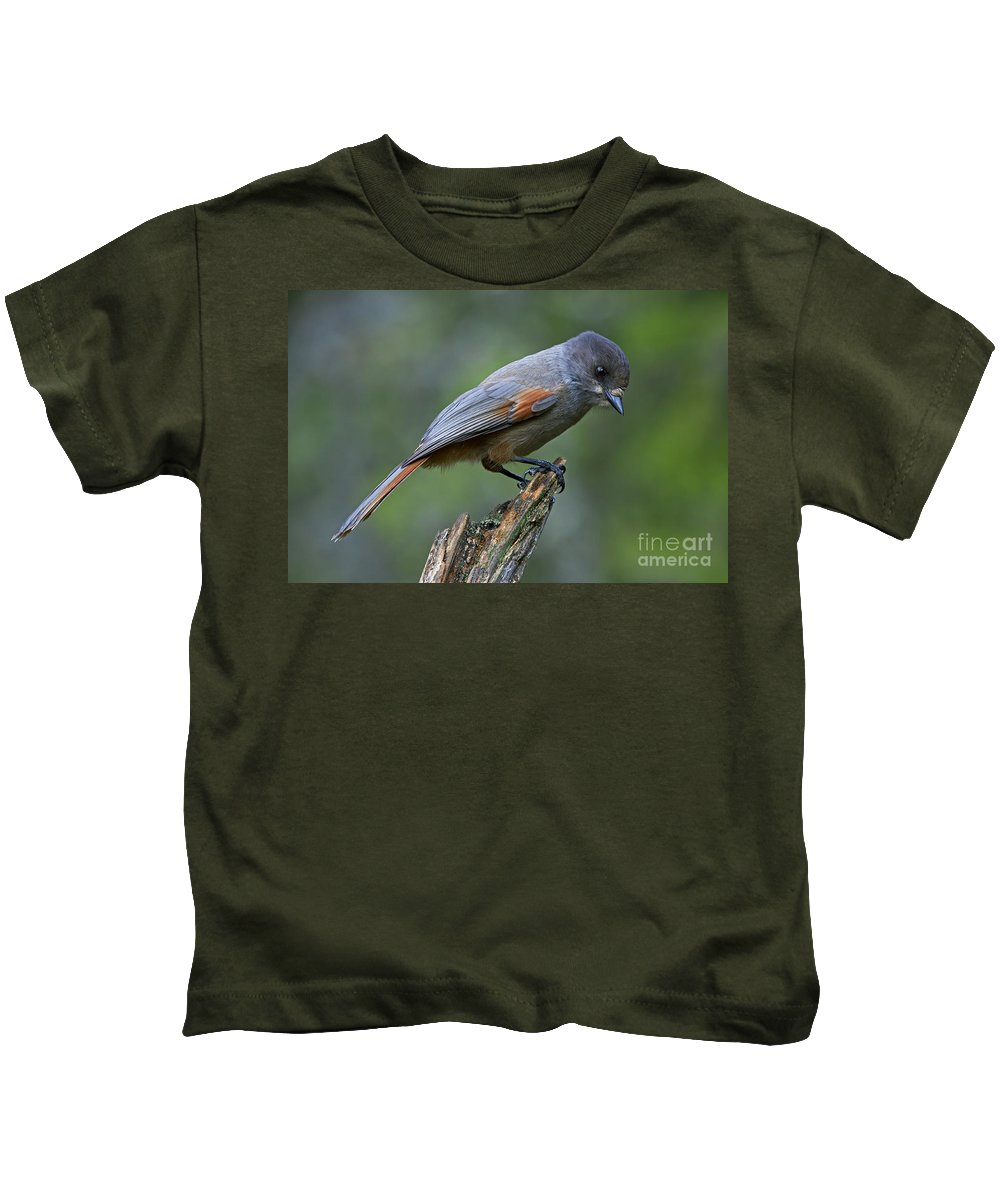 Siberian Jay Kids T-Shirt featuring the photograph 110613p214 by Arterra Picture Library