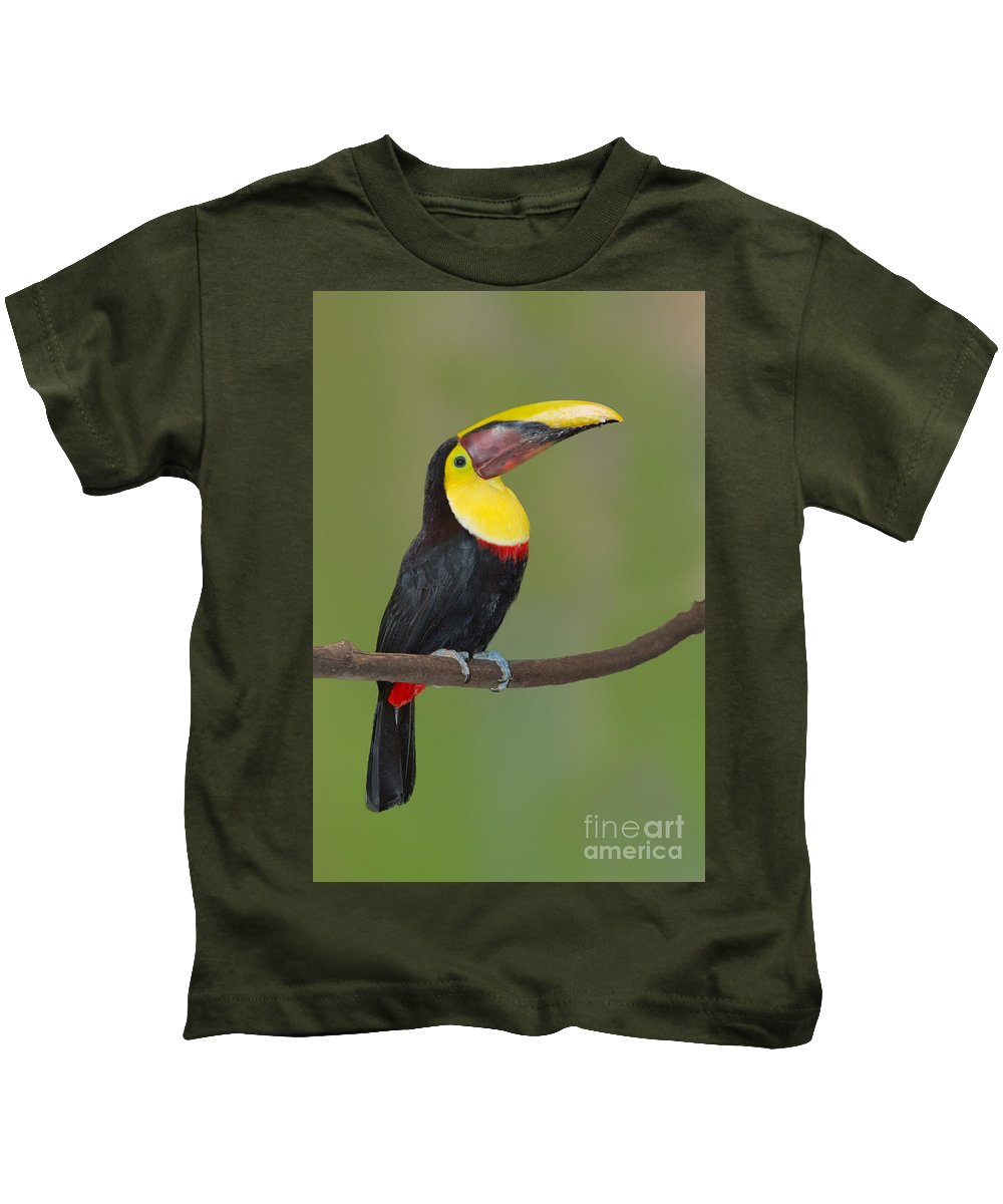 Animal Kids T-Shirt featuring the photograph Chestnut-mandibled Toucan by Anthony Mercieca