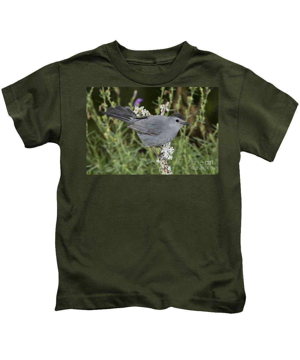 Gray Catbird Kids T-Shirt featuring the photograph Gray Catbird by Anthony Mercieca