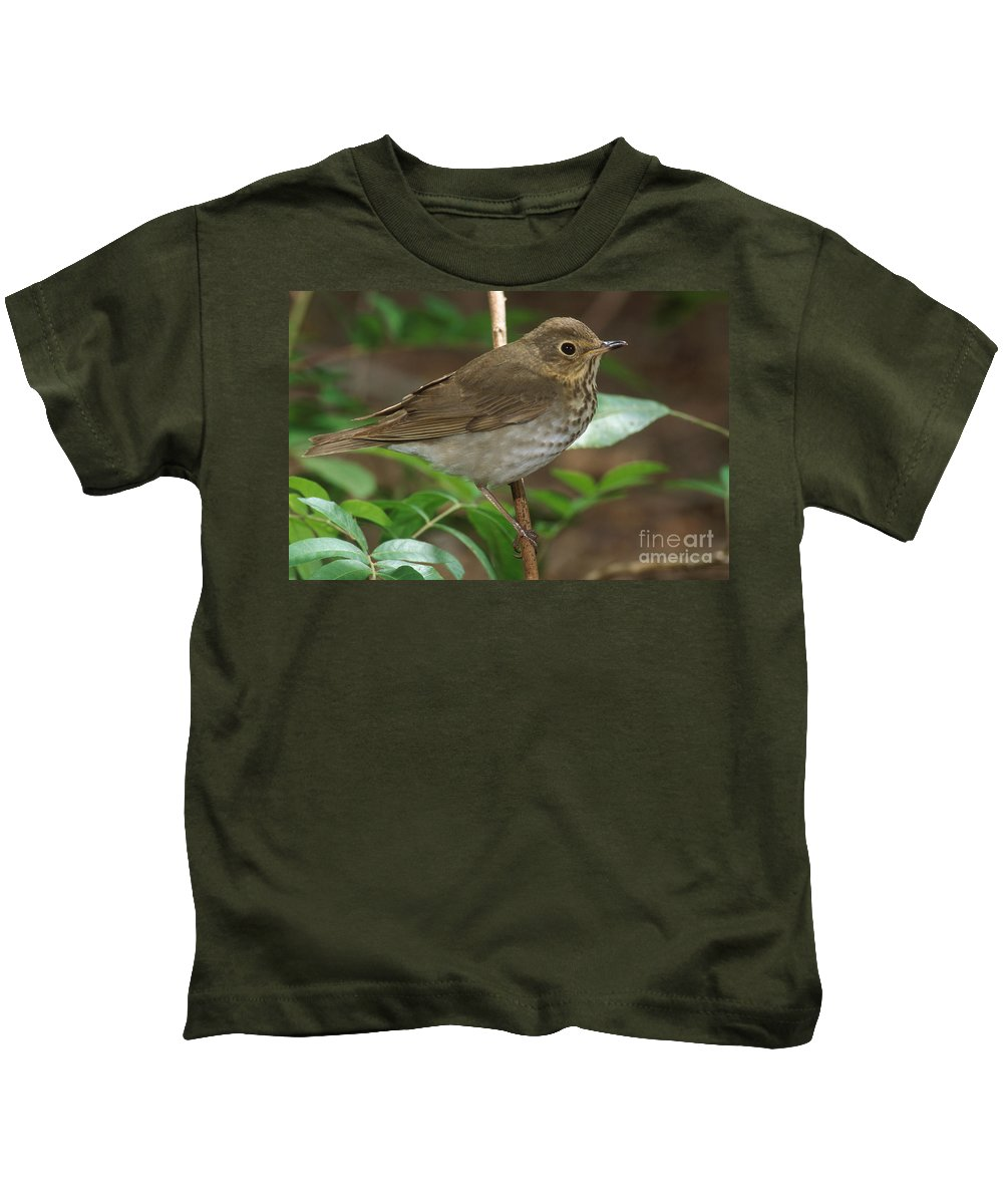 Animal Kids T-Shirt featuring the photograph Swainsons Thrush by Anthony Mercieca
