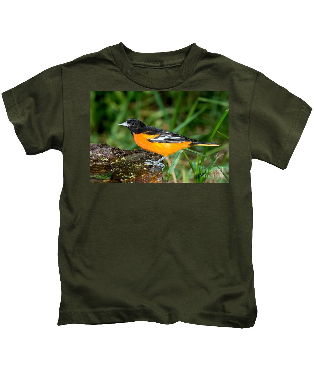 Animal Kids T-Shirt featuring the photograph Baltimore Oriole by Anthony Mercieca