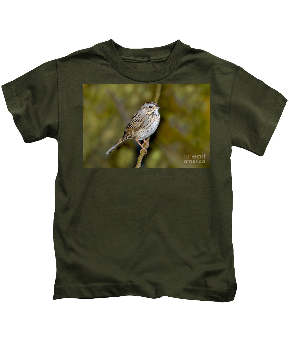 Fauna Kids T-Shirt featuring the photograph Lincolns Sparrow by Anthony Mercieca