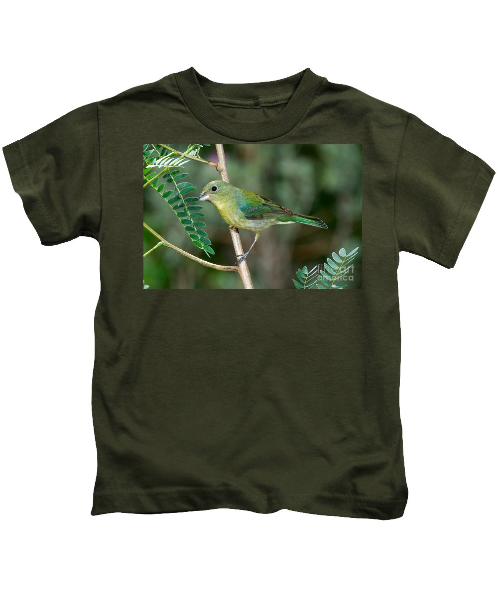 Fauna Kids T-Shirt featuring the photograph Painted Bunting by Anthony Mercieca