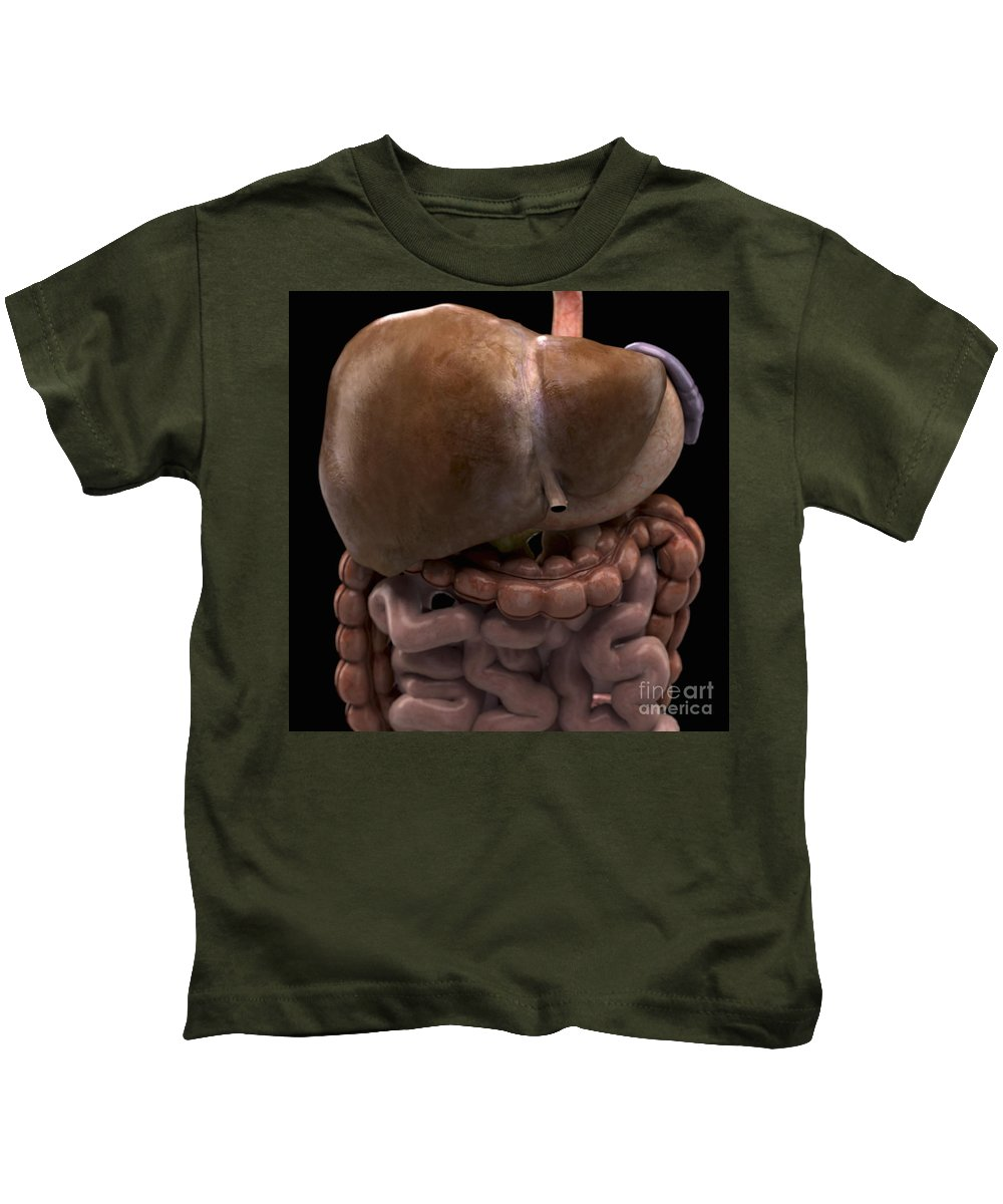 3d Visualisation Kids T-Shirt featuring the photograph The Digestive System by Science Picture Co