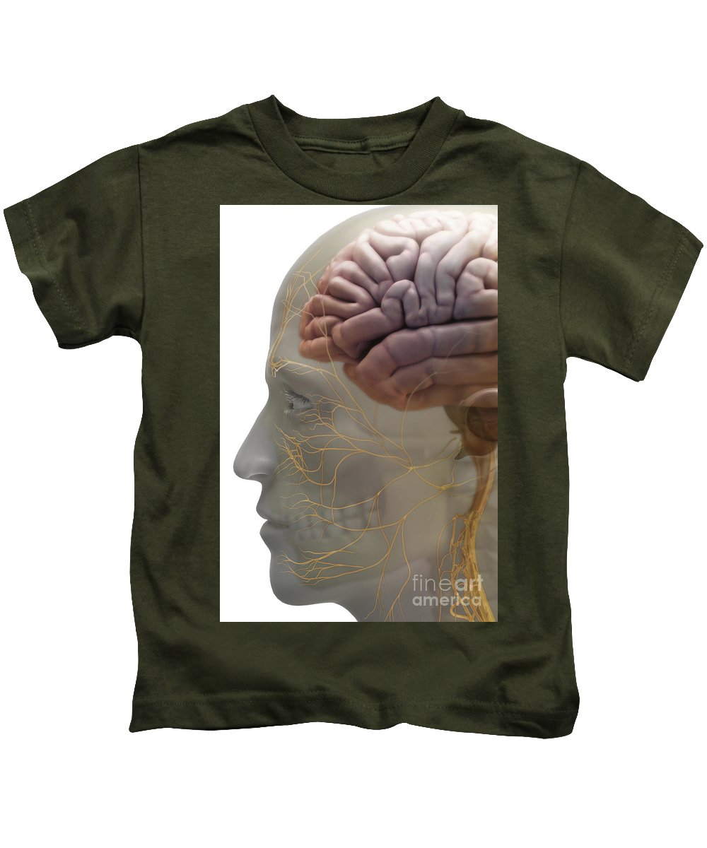 Cortex Kids T-Shirt featuring the photograph Human Brain by Science Picture Co