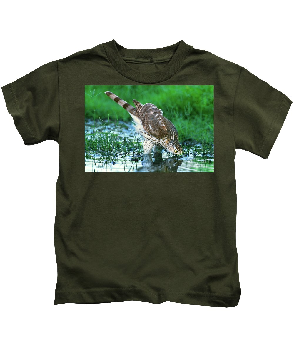 Cooper's Hawk Kids T-Shirt featuring the photograph A Wild Juvenile Cooper's Hawk Drinks From A Pond by Dave Welling