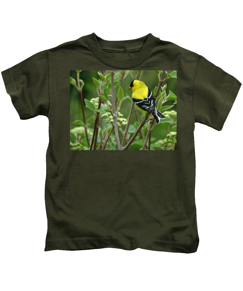 American Goldfinch Kids T-Shirt featuring the photograph American Goldfinch by Bruce Morrison