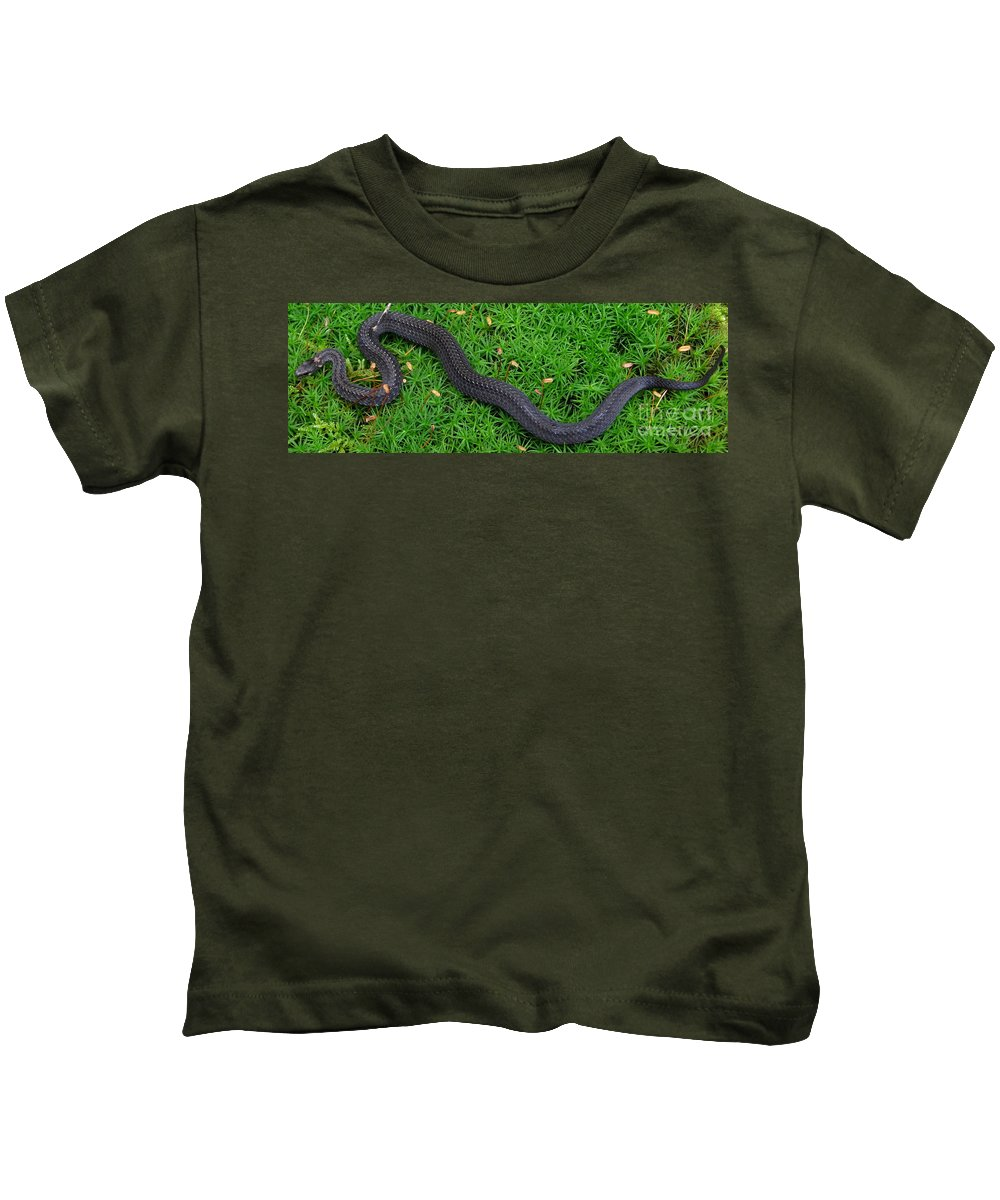 Pennsylvania Snakes Anerythristic Northern Red Belly Snake Images North American Nonvenomous Snake Species Of Pennsylvania Preserve Biodiversity Value Diversity Of Life Appalachian Mountain Forest Creatures Appalachian Forest Ecosystem Rare Reptiles Endangered Species Protect Nature Rare Snakes Herpetology Small Black Snake Kids T-Shirt featuring the photograph Anerythristic Red Belly Snake by Joshua Bales
