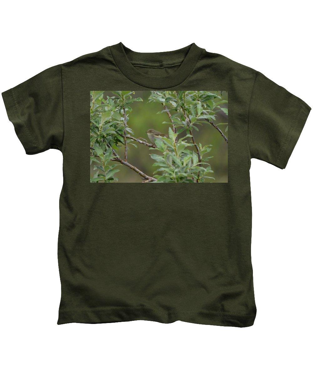 Arctic Warbler Kids T-Shirt featuring the photograph Arctic Warbler by James Petersen