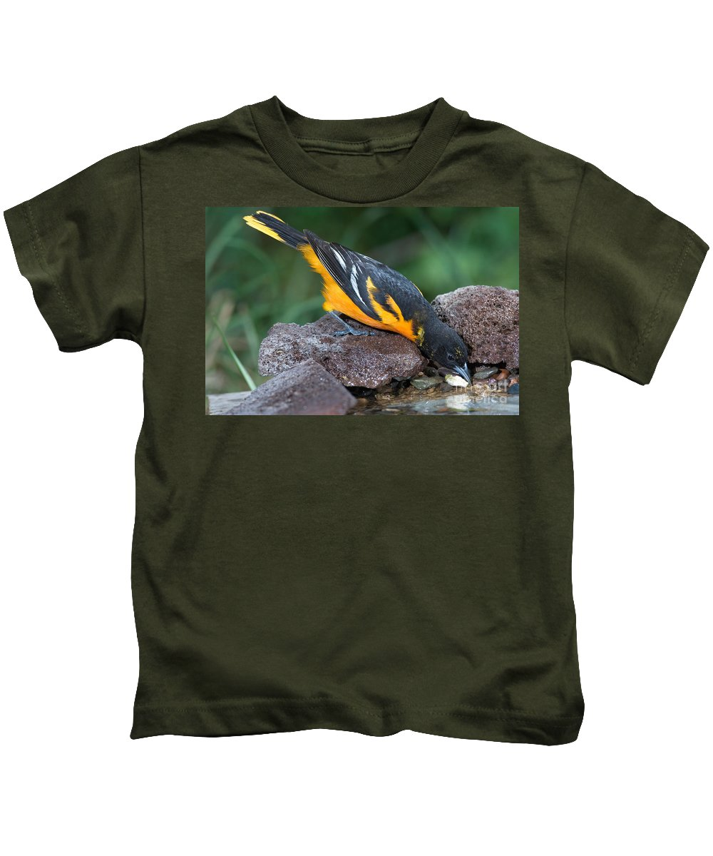 Animal Kids T-Shirt featuring the photograph Baltimore Oriole Drinking by Anthony Mercieca