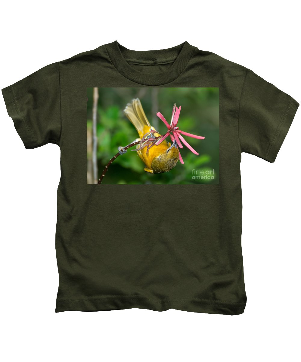 Animal Kids T-Shirt featuring the photograph Baltimore Oriole Feeding On Coral Bean by Anthony Mercieca