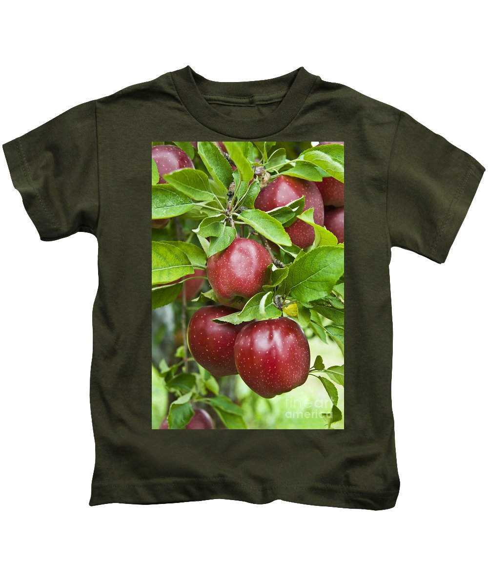 Apple Kids T-Shirt featuring the photograph Bunch Of Red Apples by Anthony Sacco