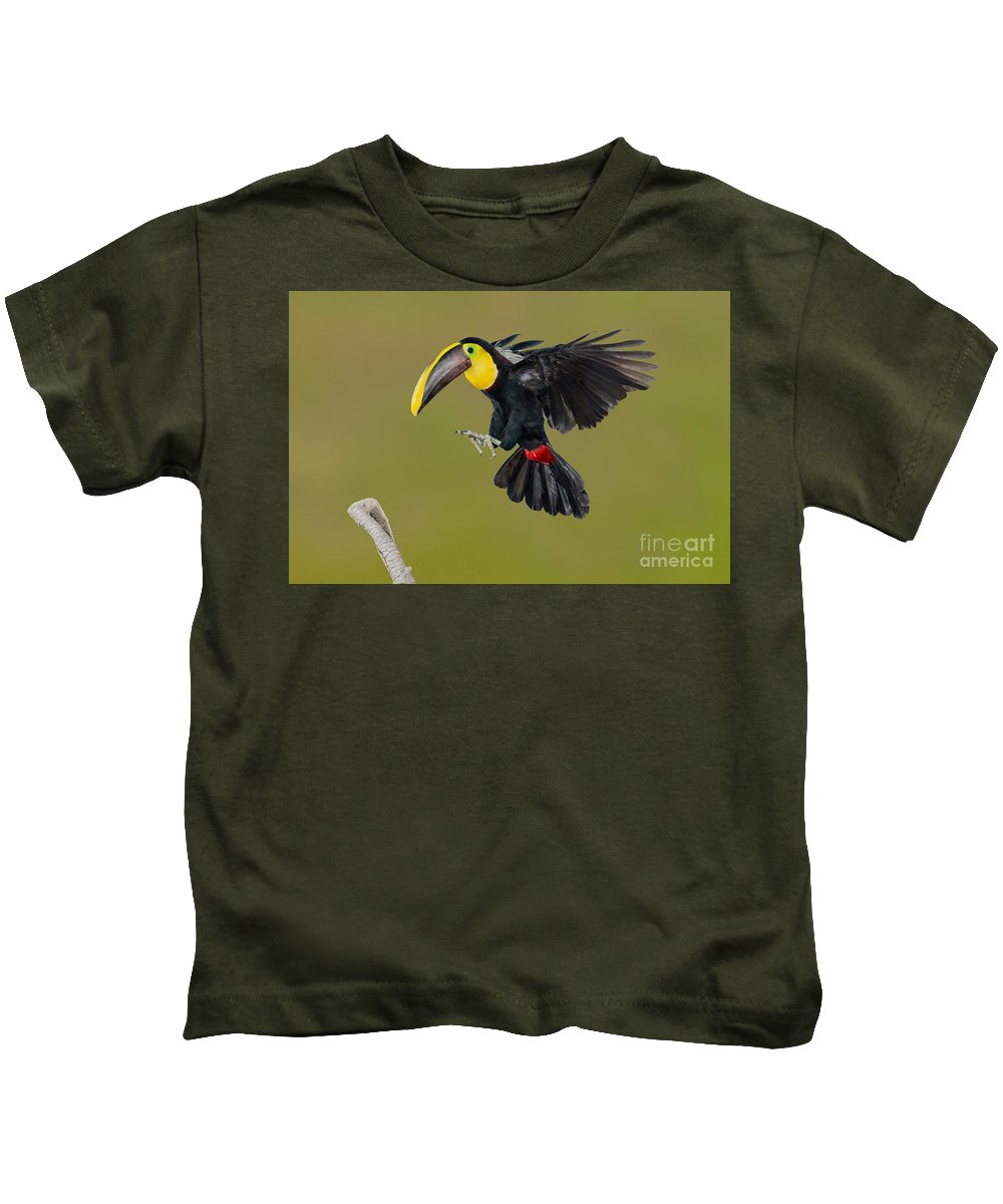 Animal Kids T-Shirt featuring the photograph Chestnut-mandibled Toucan Landing by Anthony Mercieca