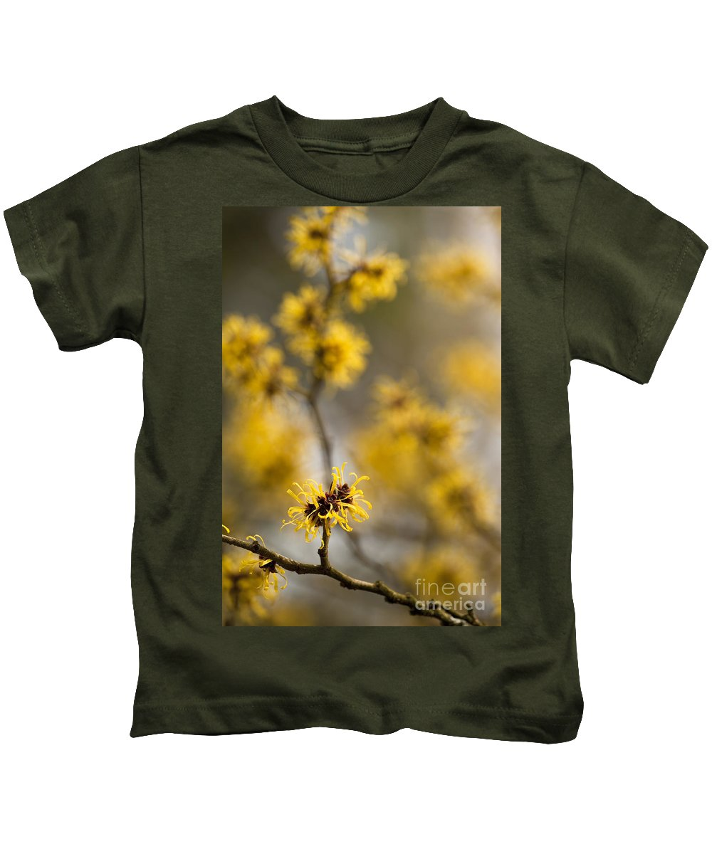 Annegilbert Kids T-Shirt featuring the photograph Chinese Witch Hazel by Anne Gilbert