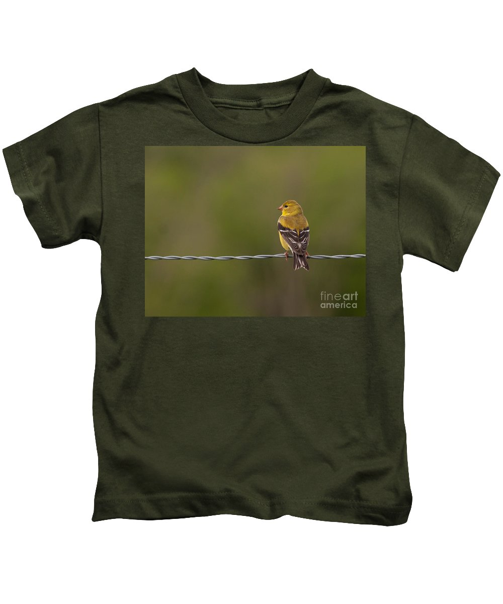 American Kids T-Shirt featuring the photograph Female American Goldfinch by Douglas Stucky