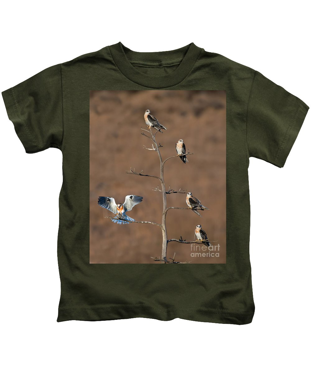Animal Kids T-Shirt featuring the photograph Five White-tailed Kite Siblings by Anthony Mercieca