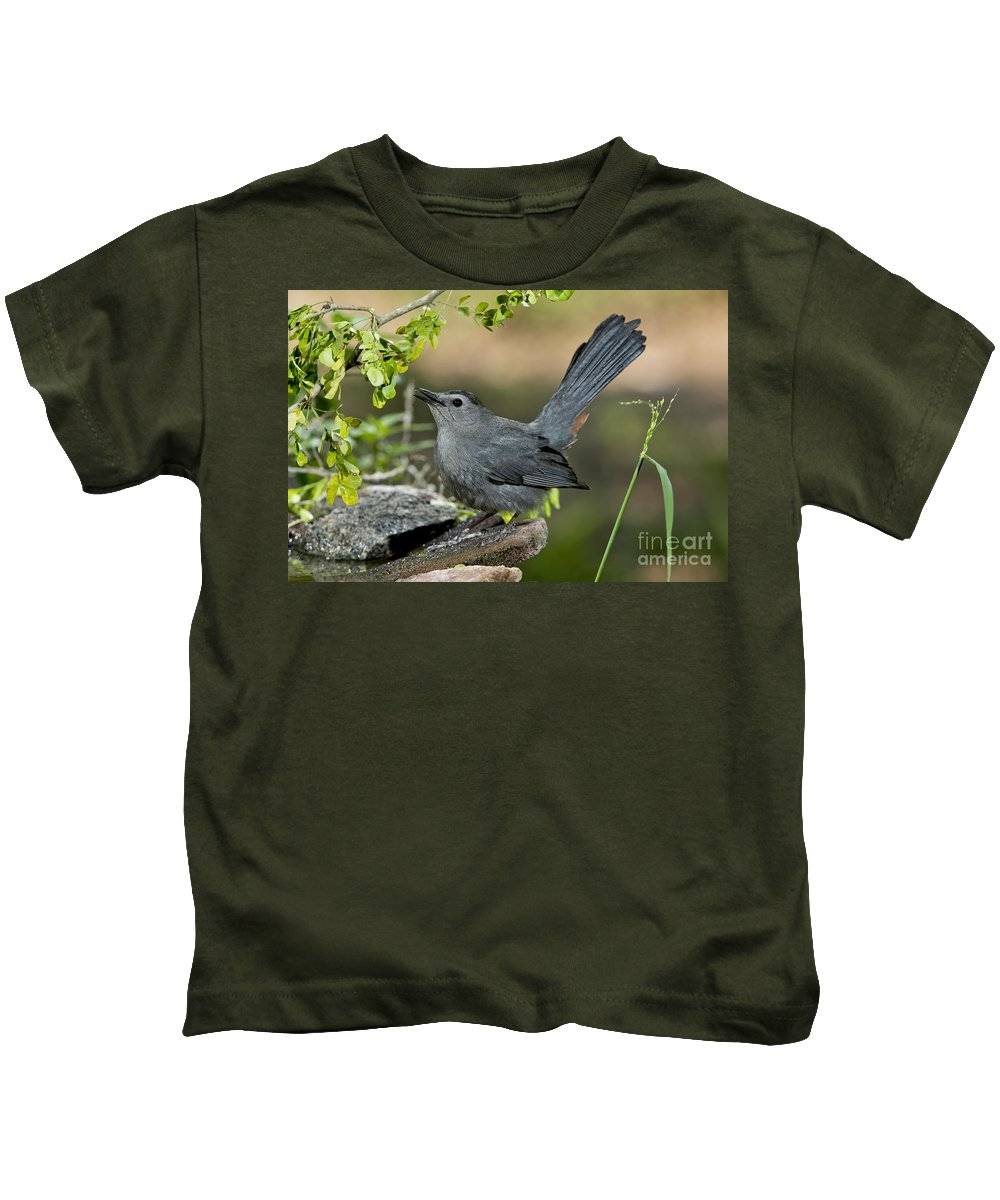 Gray Catbird Kids T-Shirt featuring the photograph Gray Catbird Drinking by Anthony Mercieca
