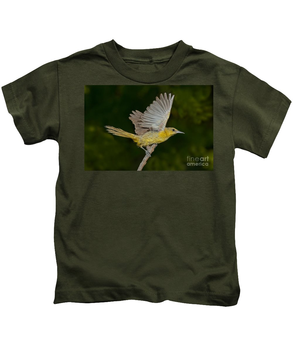 Hooded Oriole Kids T-Shirt featuring the photograph Hooded Oriole Hen At Take by Anthony Mercieca
