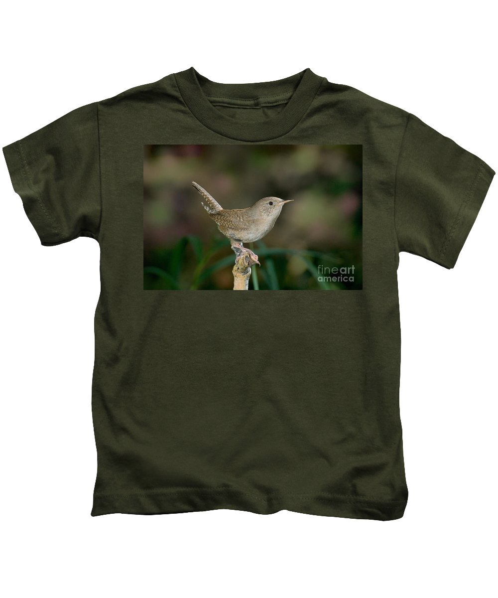 Fauna Kids T-Shirt featuring the photograph House Wren by Anthony Mercieca