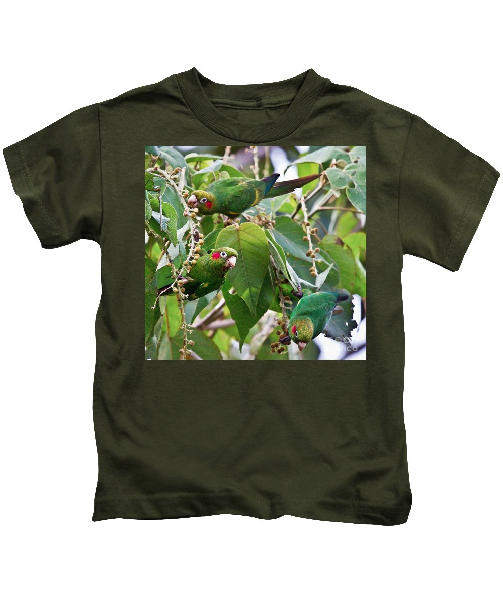 Parrot Kids T-Shirt featuring the photograph Hungry Chiriqui Conures by Heiko Koehrer-Wagner