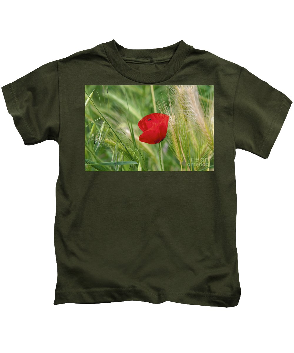 La Spezia Italy Poppy Poppies Plant Plants Grass Grasses Bug Bugs Kids T-Shirt featuring the photograph Italian Poppy by Bob Phillips