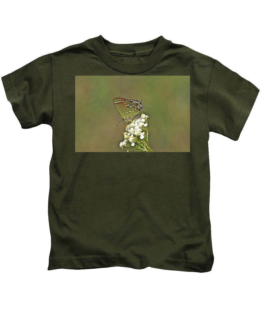 callophrys Gryneus Kids T-Shirt featuring the photograph Juniper Or Olive Hairstreak Butterfly - Callophrys Gryneus by Mother Nature