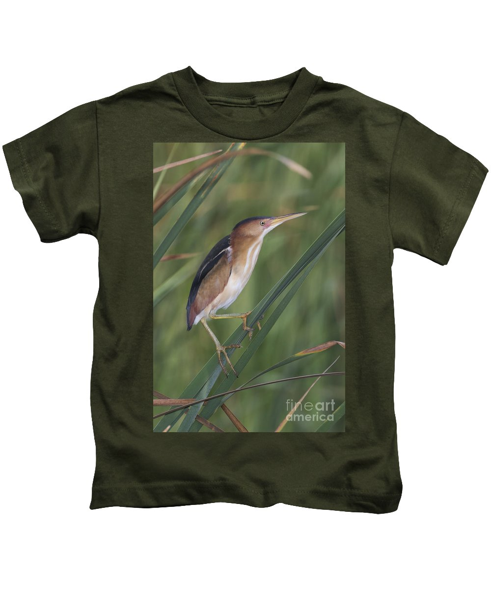 Least Bittern Kids T-Shirt featuring the photograph Least Bittern by Anthony Mercieca