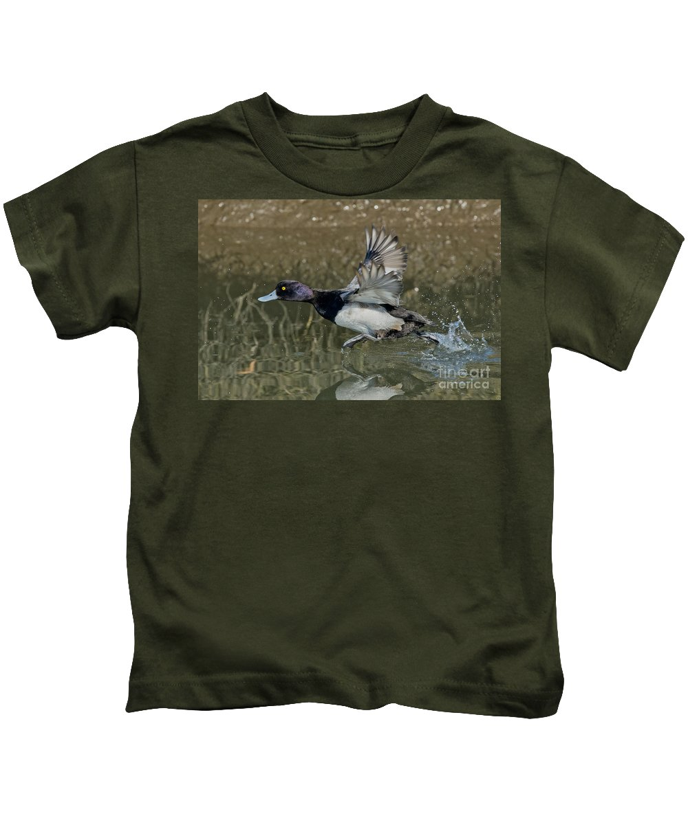 Lesser Scaup Kids T-Shirt featuring the photograph Lesser Scaup Drake by Anthony Mercieca