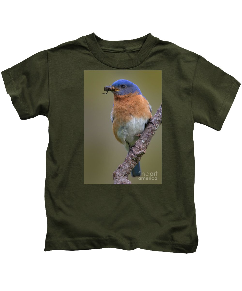Eastern Bluebird Kids T-Shirt featuring the photograph Male Eastern Bluebird With Spider by Jerry Fornarotto