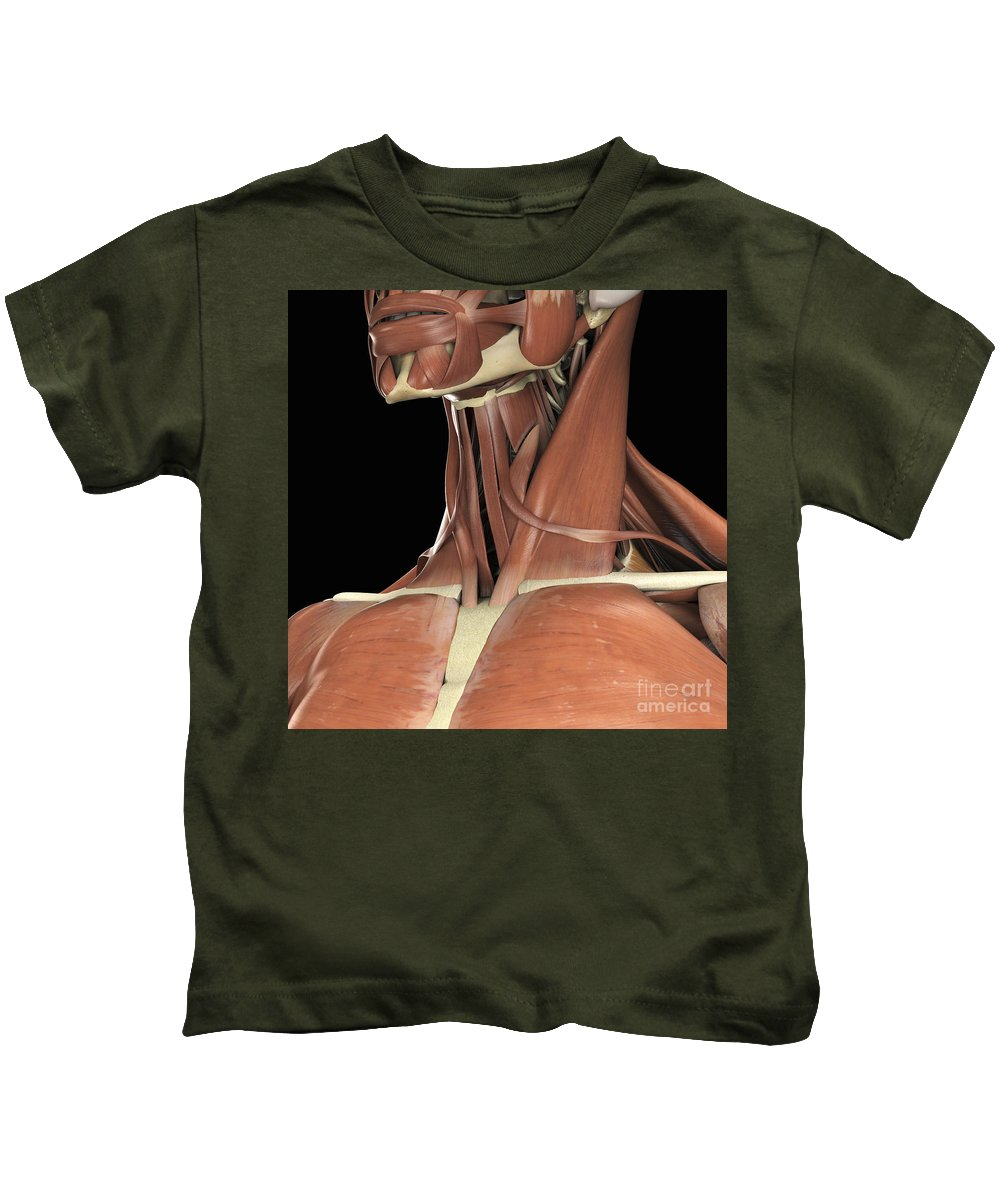 3d Visualization Kids T-Shirt featuring the photograph Muscles Of The Upper Chest And Neck by Science Picture Co