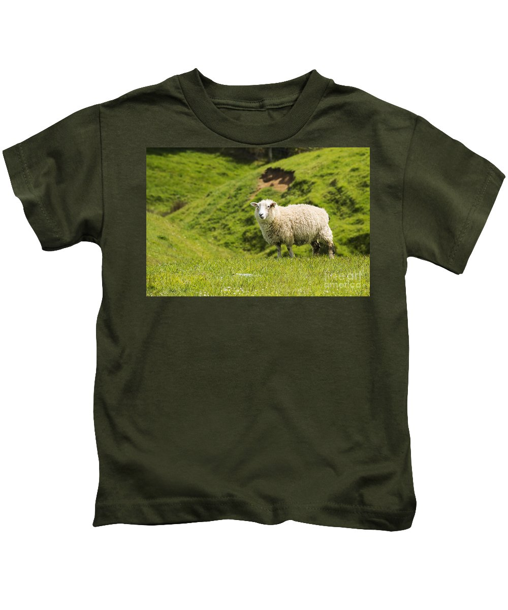 New Zealand Sheep Lamb Lambs Grass Grasses Hill Hills Foliage Animal Animals Creature Creatures Landscape Landscapes Kids T-Shirt featuring the photograph Needs A Trim by Bob Phillips
