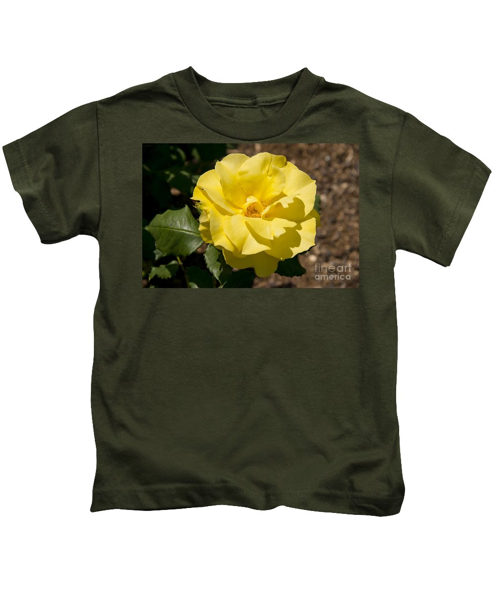 Parnell Rose Garden Dove-myer Robinson Park Auckland New Zealand Yellow Roses Gardens Parks Flower Flowers Bloom Blooms Kids T-Shirt featuring the photograph Parnell Yellow Rose by Bob Phillips