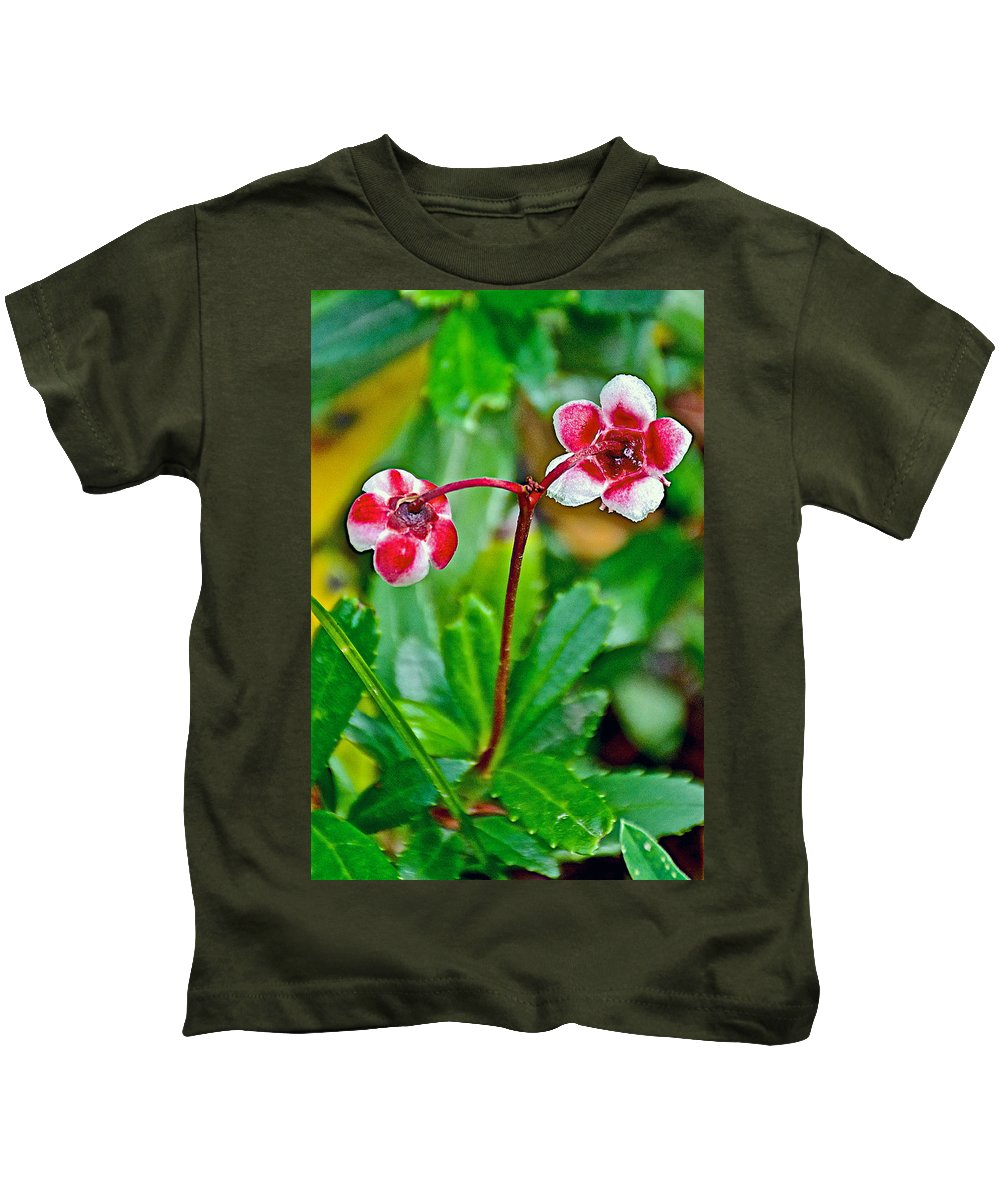 Pipsissewao Trail To Swan Lake In Grand Teton National Park Kids T-Shirt featuring the photograph Pipsissewa On Trail To Swan Lake In Grand Teton National Park-wyoming by Ruth Hager